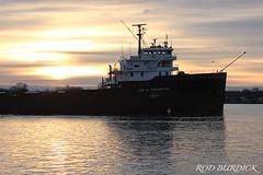 lat112518bowsrise_rb (rburdick27) Tags: leeatregurtha interlake interlakesteamshipcompany stclairriver sunrise scenicmichigan walterasterling freighter