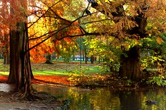 Parco Sempione (karenmansoldo) Tags: milan italy park nature parcosempione autumn fall trees lake water