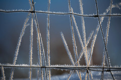 Winter morning (Valérie C) Tags: ice frozen wire sprig winter nature