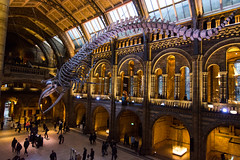 Natural History Museum London (nickstone333) Tags: naturalhistorymuseum london museum entrance hope bluewhale nikon nikond7100 d7100 atx124afprodx tokinaaf1224mmf4