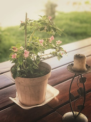 Vintage mood (robertoguigou) Tags: flower fade grunge nature blossom plant iphoneography iphone mood vintage