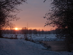 A Bright Sunrise (Marit Buelens) Tags: sunrise zonsopgang sneeuw winter pool pond vijver poel willow wilg knotwilg naturereserve natuurgebied natuurreservaat belgië belgium flanders vlaanderen westvlaanderen brugge bruges gemeneweidebeek path