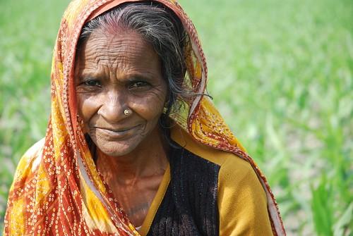 Farmer weeding maize field in Bihar, India