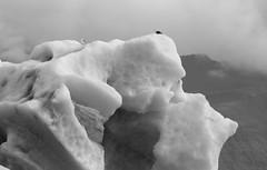 Ancient Ice (peterkelly) Tags: iceland bw bestoficeland digital canon 6d gadventures ice berg jökulsárlónglacierlagoon iceberg bird gull