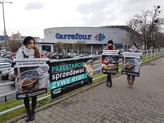 Carrefour Wrocław1.d (Otwarte Klatki) Tags: aktywizm karpie streetwork