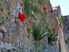 Sumber (Vid Pogacnik) Tags: hrvatska croatia istra istria ancient ruines historical šumber sumber mansion poppies
