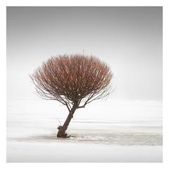 Goblin (Vesa Pihanurmi) Tags: tree foggy misty winter snow minimalism trunk branches espoo finland treesarepoems