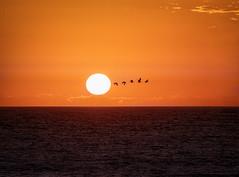 Flying close to the sun (Ed Rosack) Tags: usa landscape multipleexposure nature flaglerbeach centralflorida seascape ©edrosack florida us