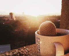 Life (blessygacasan) Tags: sunrise sunshine brandnewday yellow hue cactus life lifestream