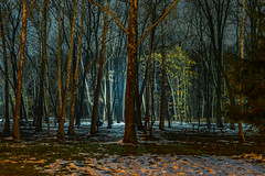 Light in the dark (HardDriveKC) Tags: tree light dark night snow wife hobby d3300 nikon nikkor 1855mm kitlens art kansascity missouri park ngc