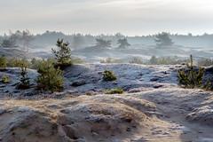 Een koude ochtend (Pieter ( PPoot )) Tags: koud ochtend bevroren aekingerzand laagjes
