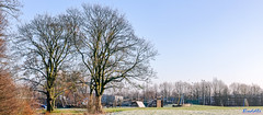 Caludon Castle Park Coventry 23rd January 2019 (boddle (Steve Hart)) Tags: stevestevenhartcoventryunitedkingdomcanon5d4 caludon castle park coventry 23rd january 2019 steve hart boddle steven bruce wyke road wyken united kingdon england great britain canon 5d mk4 2470mm standard wild wilds wildlife life nature natural bird birds flowers flower fungii fungus insect insects spiders butterfly moth butterflies moths creepy crawley winter spring summer autumn seasons sunset weather sun sky cloud clouds panoramic landscape