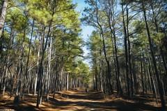 Hiking (gusdiaz) Tags: hike hiking mountain forest bosque nature naturephotography fuji fujifilm fujiphotography trees arboles naturaleza sendero senderismo monring madrugada winter cold invierno frio arboleda