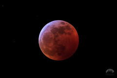 January 2019 Lunar eclipse totality-2150 (Tristan Rayner) Tags: eclipse squamish composite full moon lunar wolf space astrophotography night sky blood stars