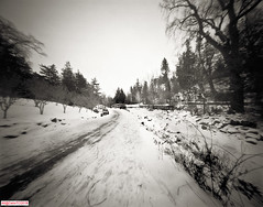 Going South on the garden road (DelioTO) Tags: 4x5 blackwhite canada d23 f175 fomapan100 garden landscape ontario panoramic pinhole snow toned trails winter woods
