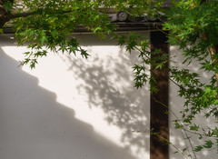 Maples and shadows (Tim Ravenscroft) Tags: shadows maple leaves wall kyoto japan hasselblad hasselbladx1d