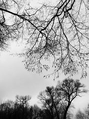 Autumn lace / Осеннее кружево (msergeevna) Tags: prestigio monochrome nature tree autumn