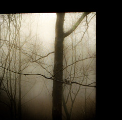 untitled (bidutashjian) Tags: fog mist trees forest woods moody atmosphere foggy nikon misty haze soft bidutashjian