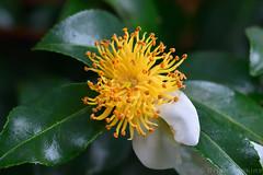 Autumn Flower (Bri_J) Tags: chatsworthhousegardens bakewell derbyshire uk chatsworthhouse gardens chatsworth statelyhome nikon d7500 autumn flower fall