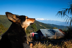Himalayas (SaumalyaGhosh.com) Tags: dog mountain color sky india home morning house see look nature blue people