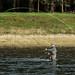 Rios perfeitos para fly fishing