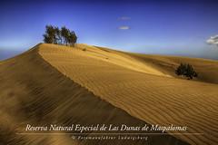 Reserva Natural Especial de Las Dunas de Maspalomas (Fotomanufaktur.lb) Tags: sanbartolomédetirajana canarias spanien es maspalomasliegtandersüdspitzederkanarischeninselgrancanaria anderküstedesatlantiksimsüdöstlichenteilwirdderortdurchdiedünenvonmaspalomasvommeergetrenntmaspalomasbestehtzumgrosteilausferienanlagenundderdazugehörigeninfrastrukturauswikipedia