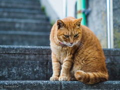 Cat of Enoshima (Yorkey&Rin) Tags: 2019 animal cat em5markii enoshima fujisawa january japan kanagawa olympus olympusm45mmf18 p1240052 rin winter 一月 江の島 冬 藤沢市 猫