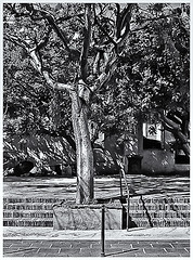 Pentax Auto 110 (1978) (Black and White Fine Art) Tags: pentaxauto1101978 pentax11024mmf28 pentaxmini pentax aristaedu100 110format formato110 smallformat formatopequeño bn bw streetphotography fotografiacallejera sanjuan oldsanjuan viejosanjuan puertorico
