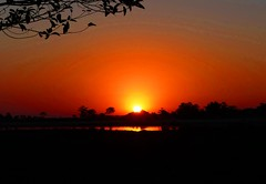 Sunset over the Worlds largest River Island - Majuli (forest - Thanks - 7.7 M+ views ...) Tags: sunset silhouette sky grass tree trees water river lake island mountains cool colours beautiful light looks good scenic scene sweet scarlet red yellow