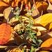 Herbst an der Alb