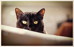 Pepe (Pepenera) Tags: black cat cats gatto gato gatti portrait eye
