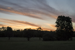 Evening Reserve (SteveKPhotography) Tags: stevekphotography sony alpha ilca99m2 a99ii nature outdoors trees sal70400g2 scenery scenic landscape sky sunset dusk twilight clouds weather light shadow canningriver westernaustralia