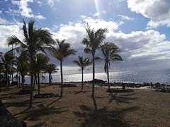 Cloudy Palms (Jojo Flow) Tags: lanzarote puertodelcarmen palms beach clouds cloudy sunset wintersun outside outdoor ocean sun sunlight