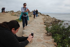 IMG_10934 (mudsharkalex) Tags: california pacificgrove pacificgroveca loverspointpark