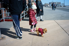 Mini-me (dtanist) Tags: nyc newyork newyorkcity new york city sony a7 7artisans 35mm brooklyn brighton beach boardwalk girl child kid dog pet owner matching parka coat