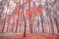 MÜHLHAUSEN (01dgn) Tags: badenwürttemberg mühlhausen almanya germany germanlandscapes winter travel deutschland autumn colours