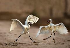 IMG-20171229-WA0011 (TARIQ HAMEED SULEMANI) Tags: sulemani tariq tourism trekking tariqhameedsulemani winter wildlife wild birds nature nikon
