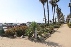 2015-04-01_16-28-10_anonEOS70_733330_o_Audrey (Miguel Discart (Photos Vrac)) Tags: beach canon canoncanoneos70d canoncanoneos70defs1855mmf3556isstm canoneos70d efs1855mmf3556isstm img iso100 losangeles plage venicebeach 2015
