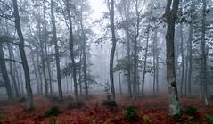 ALTUBE zarra 6 (juan luis olaeta) Tags: paisajes landscape natura forest bosque basoa hayedo pagoa fog laiñoa nieblas altube photoshop lightroom