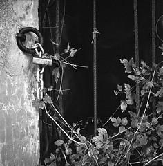 il buio imprigionato (mikele.nicoletti) Tags: rolleiflexplanar35f kodaktrix400 selfdeveloping homedeveloping bellinihydrofen131 mediumformat medioformato 6x6 blackwhite biancoenero abandoned forgotten filmphotography film ibeliveinfilm filmisnotdead scanfromnegativefilm epsonv600scan