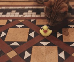 37. On the Tiles (Surfchild.) Tags: thegingerone tgo duck 119challenge 37119 365the2019edition 3652019 day37365 06feb19 wah werehere hereois whiskey