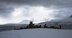 ... Neko Harbour, penisola antartica (03) ... (Felice_Miccadei) Tags: flickrunitedaward