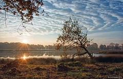 Early morning (7:50) today (edvk49) Tags: heide nederland holland utrechtseheuvelrug sunrise zonsopkomst