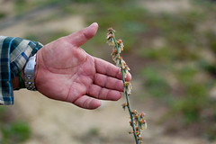 Buitrago touches a blueberry plant on the farm.