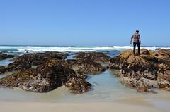 DSC_0901 (afagen) Tags: california pacificgrove montereypeninsula asilomar beach pacificocean ocean asilomarstatemarinereserve