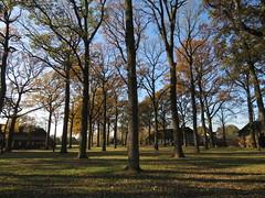 IMG_9004 (Momo1435) Tags: eindhoven brabant waalre herfst herfstkleuren netherlands autumn fall colors