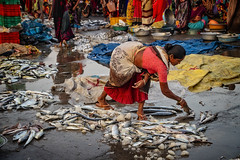 VANAKBARA : LE TRAVAIL DES FEMMES (pierre.arnoldi) Tags: diu gujarat inde pierrearnoldi artistequébécois photoderue photooriginale photocouleur photodevoyage photographequébécois photographeroninstagram photographeronflickr canon6d on1photoraw2018