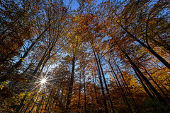 let the sun shine in your heart (freiraum7) Tags: sony a7rii i voigtlaender super wide heliar 12mm f56 iii fe