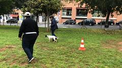 IMG_8514 (Doggy Puppins) Tags: educación canina adiestramiento canino perro dog