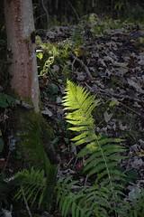 Light on bracon (zxious) Tags: wildlife canon600d tamron18270mmvclens snowdonianationalpark autumn